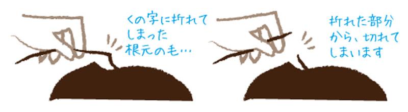kamibana3